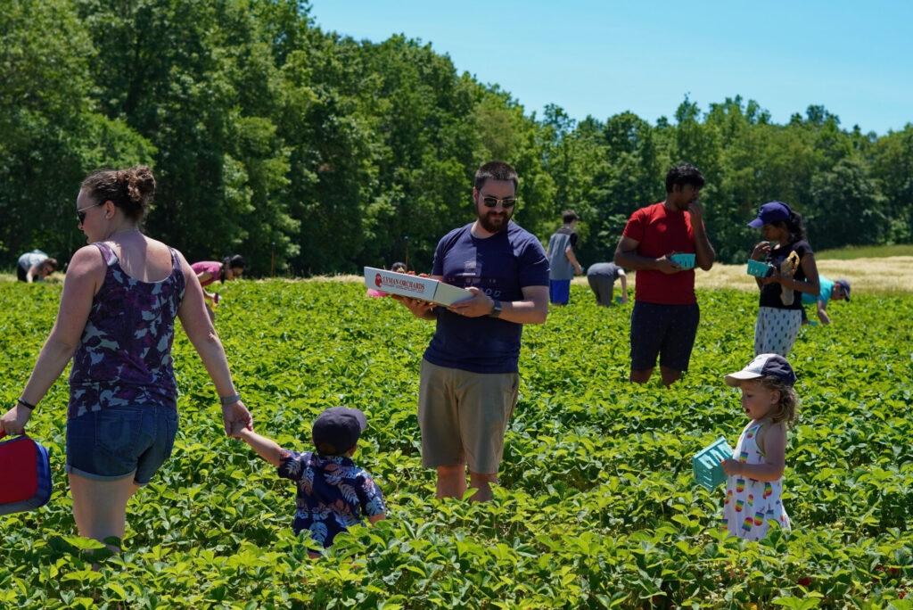 Image of fun things to do with toddlers in CT at lyman orchards.