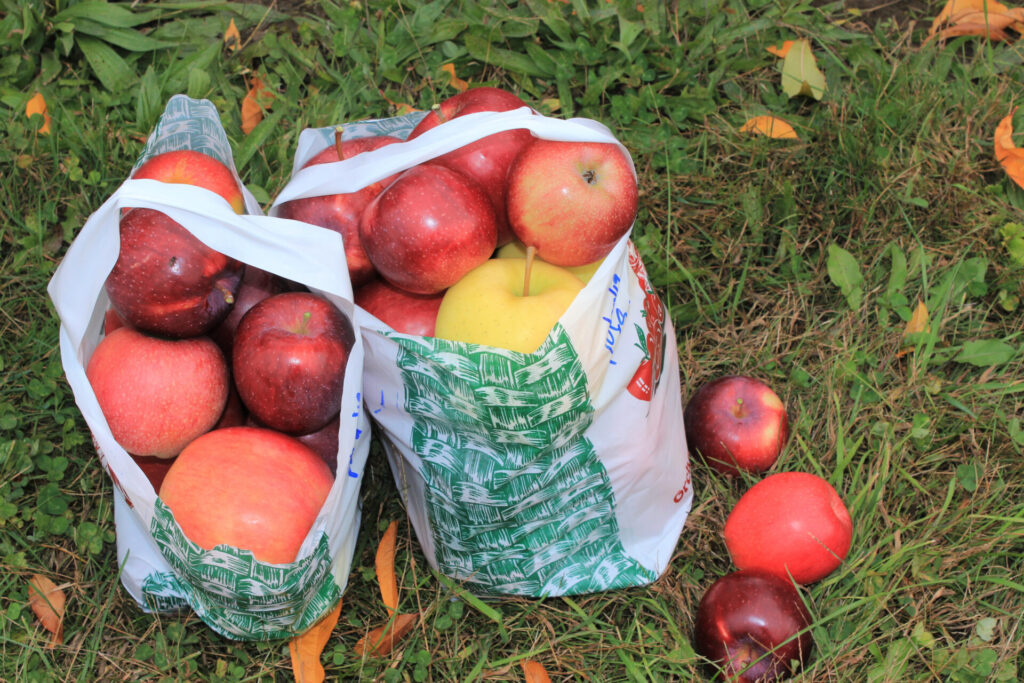 image of apples in a bag.