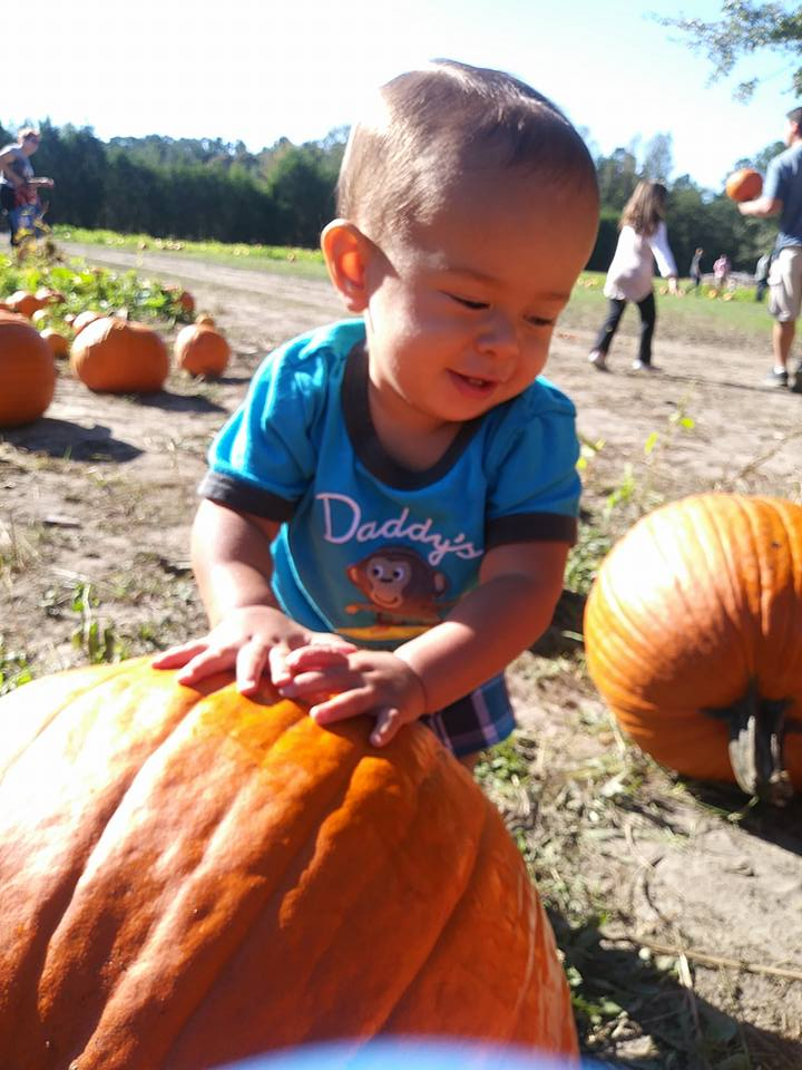 image of child pumpkin picking in connecticut at connecticut pumpkin patch.